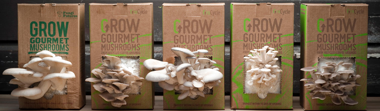 how to build a mushroom grow room