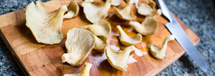Oyster mushroom recipes