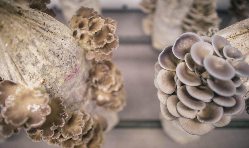Indoor Mushroom Garden How to set up a low tech mushroom farm grocycle workwithnaturefo