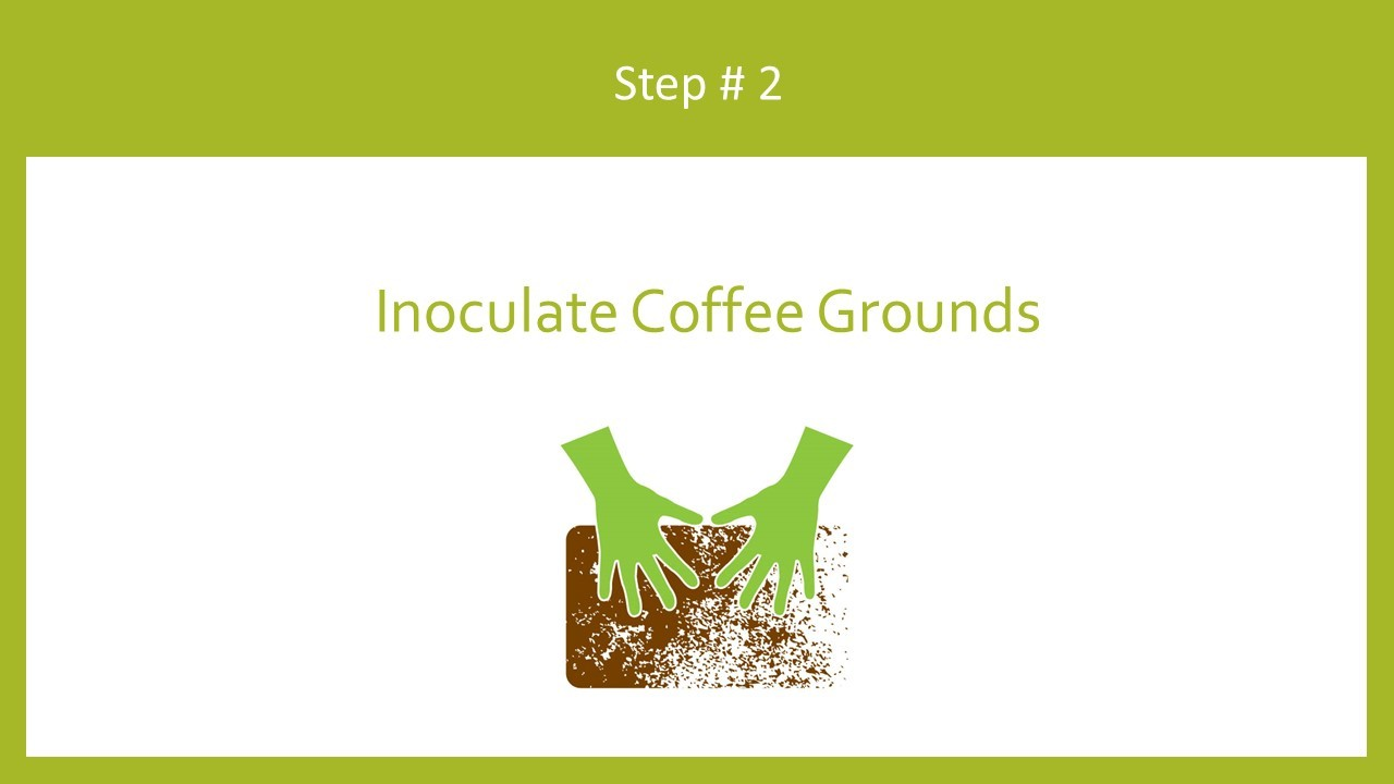 Inoculate coffee grounds with mushroom spawn