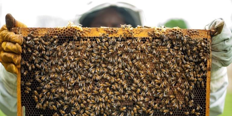 Beekeeping farming