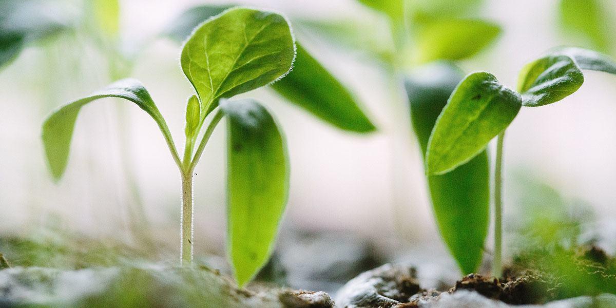 Herb Growing