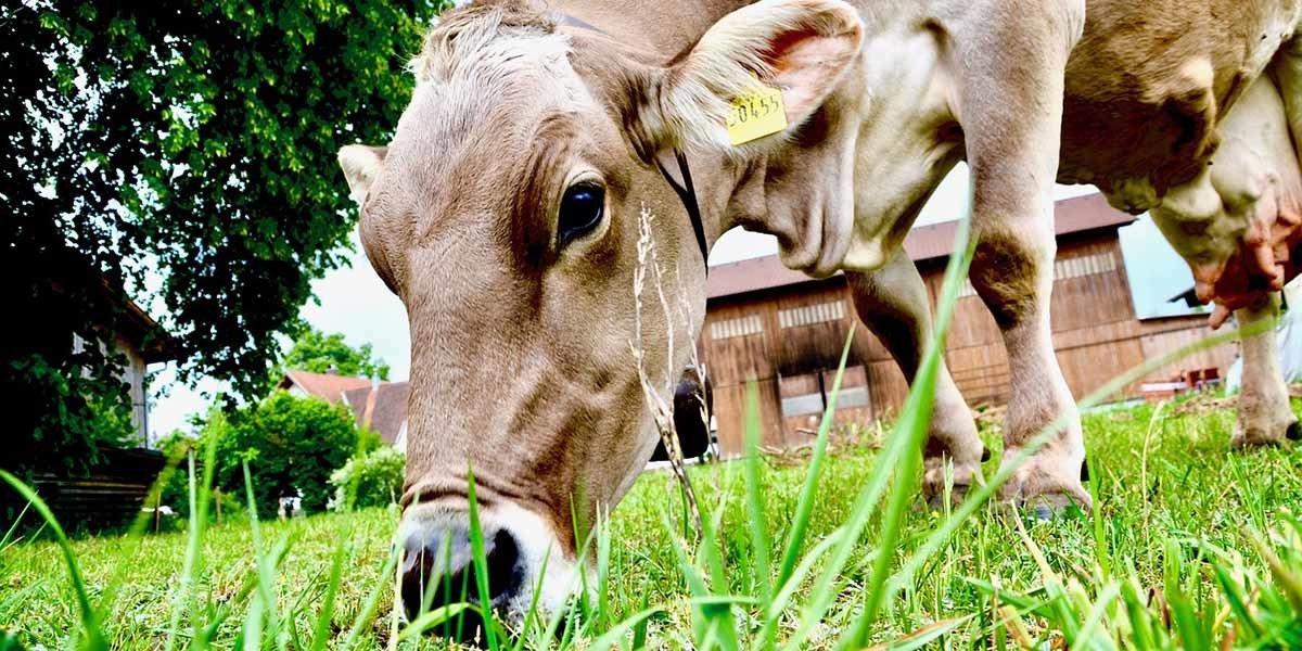 Micro Dairies farming