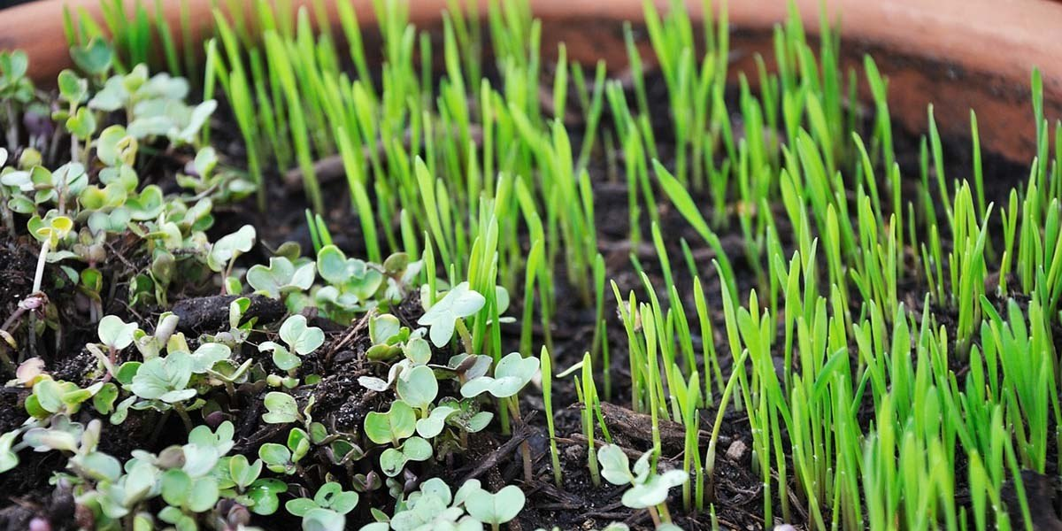 Which Are The Most Profitable Crops To Grow? - GroCycle