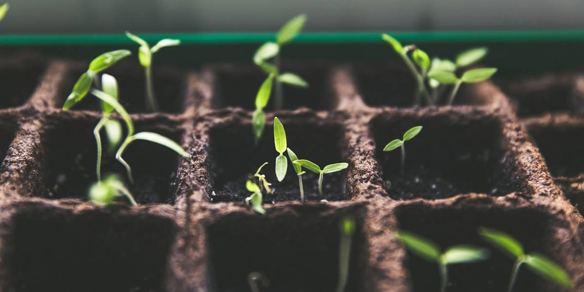 Plant Nursery growing