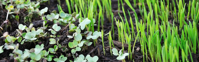 header What Are Microgreens And What Are The Health Benefits