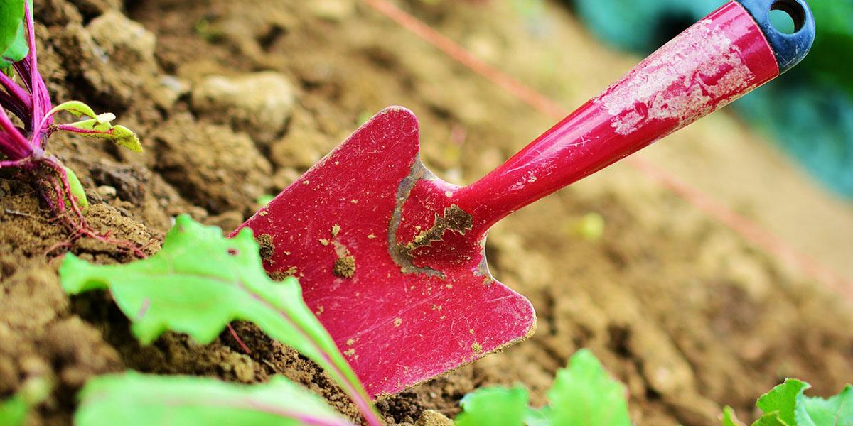 How To Harvest Microgreens
