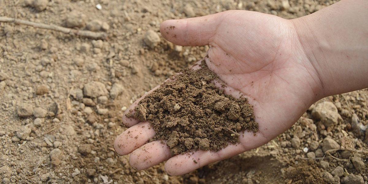 soil for microgreens