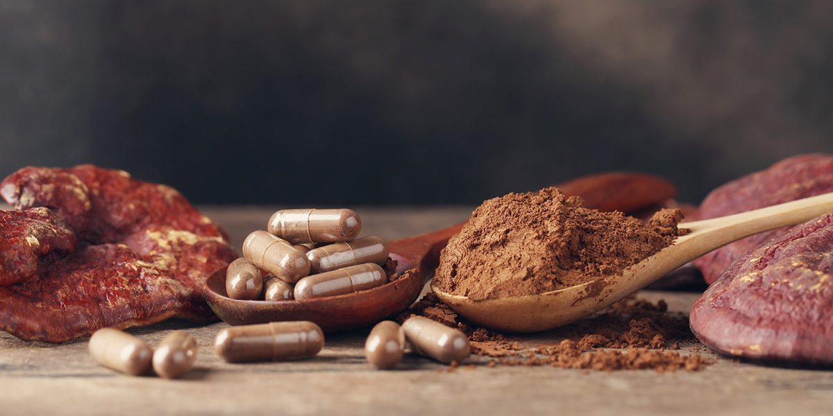 reishi mushrooms capsules