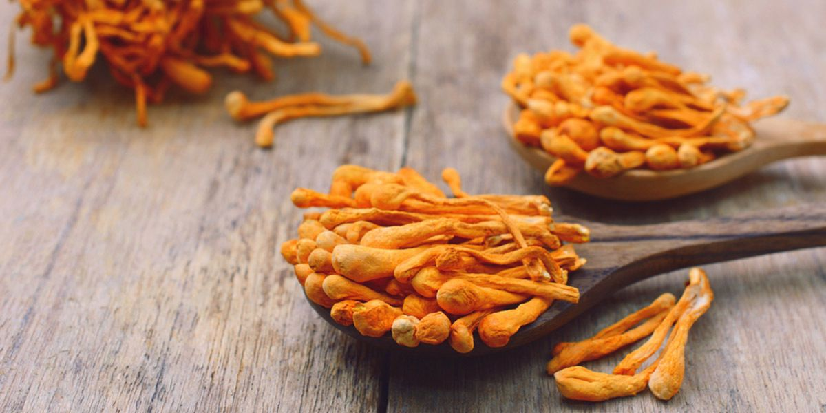 Cordyceps Mushrooms
