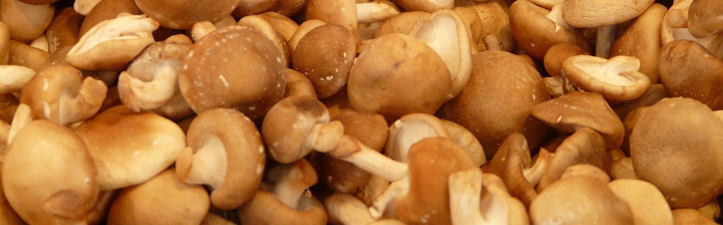 Header: How To Grow Shiitake Mushrooms: The Ultimate Guide