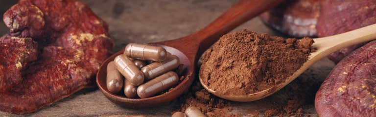 Header Medicinal Mushrooms The Complete Guide