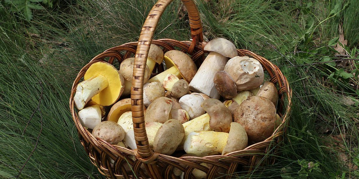 Mushrooms Are Great For Small Farms And City Dwellers Alike