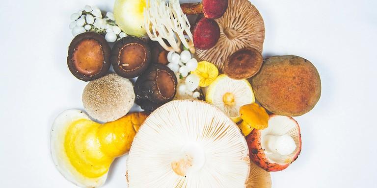 Other Mushrooms