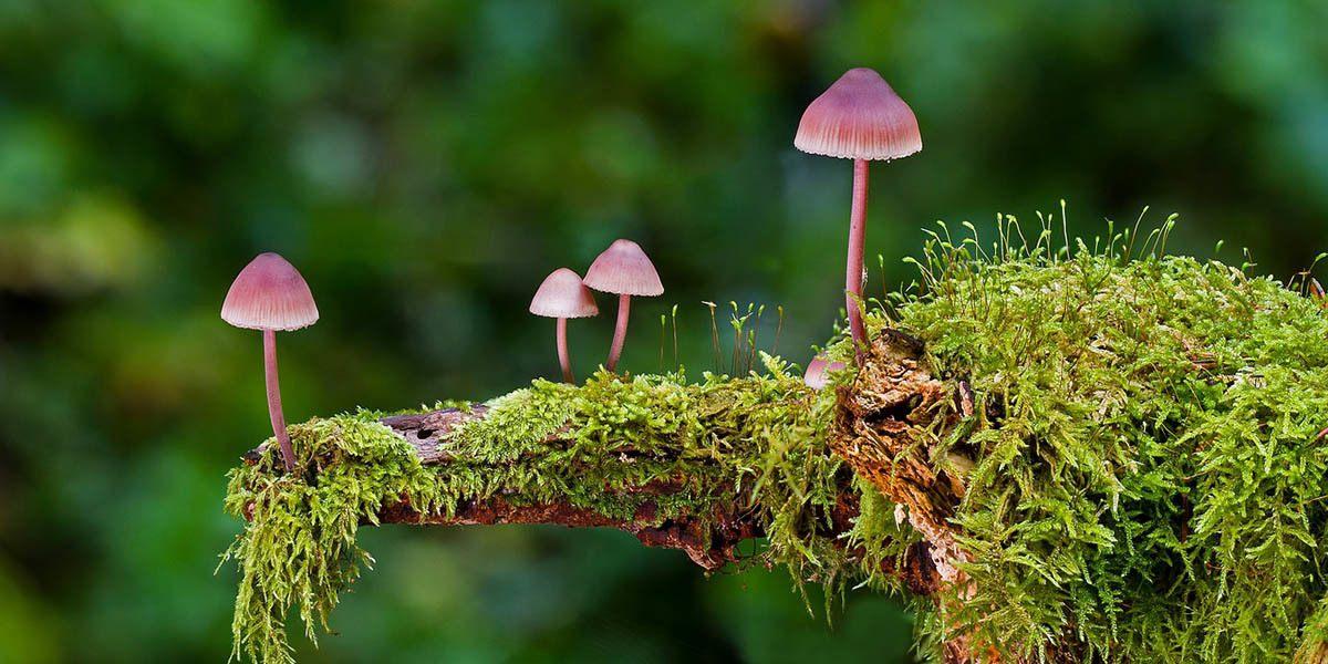 Saprotrophic Mushrooms