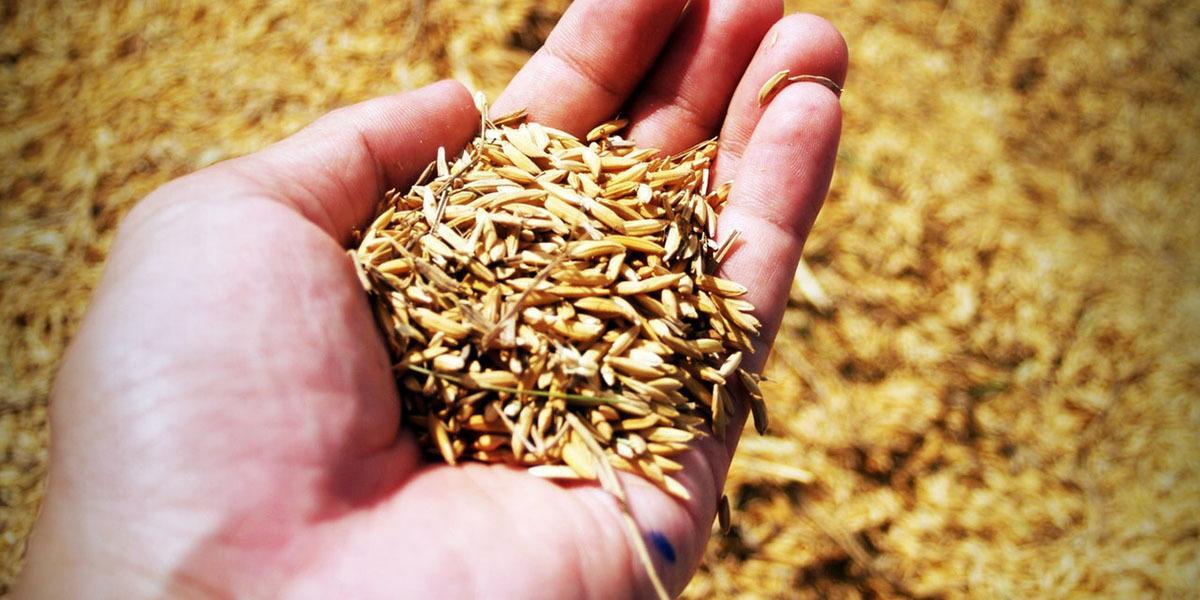Sawdust, Straw, or Grain
