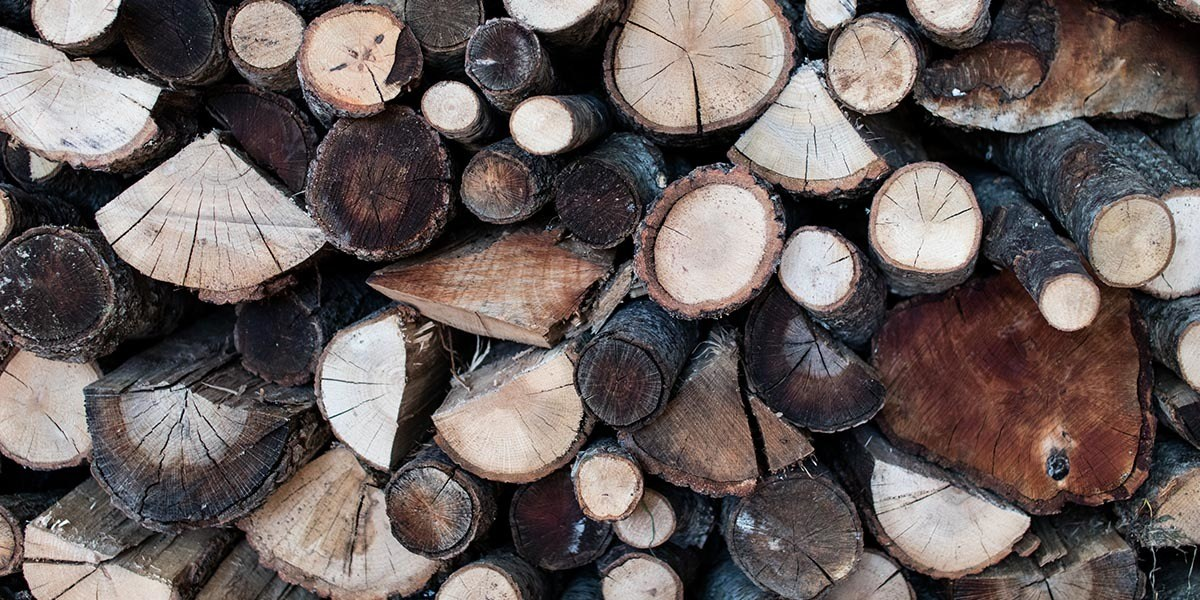 Types Of Logs for mushrooms growing