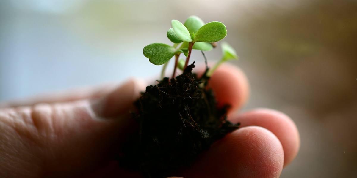 Best Growing Medium For Microgreens - GroCycle