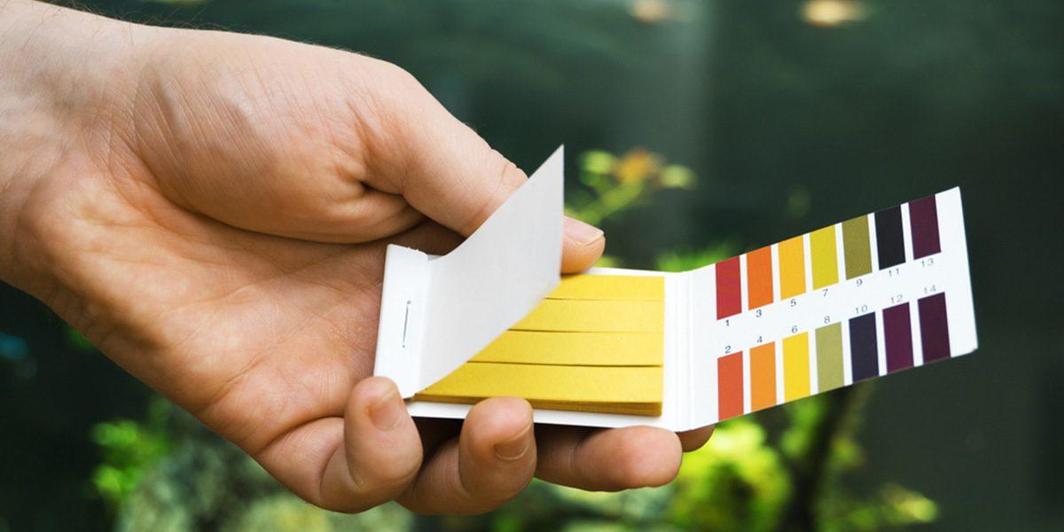pH test kit or strips