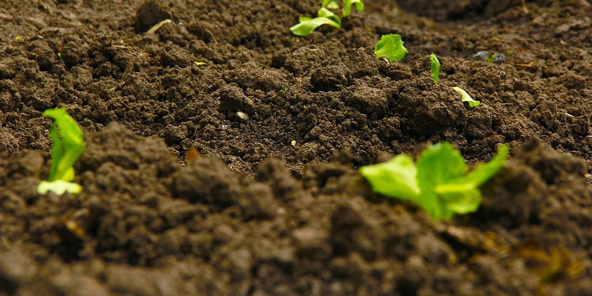 soil for growing my choice