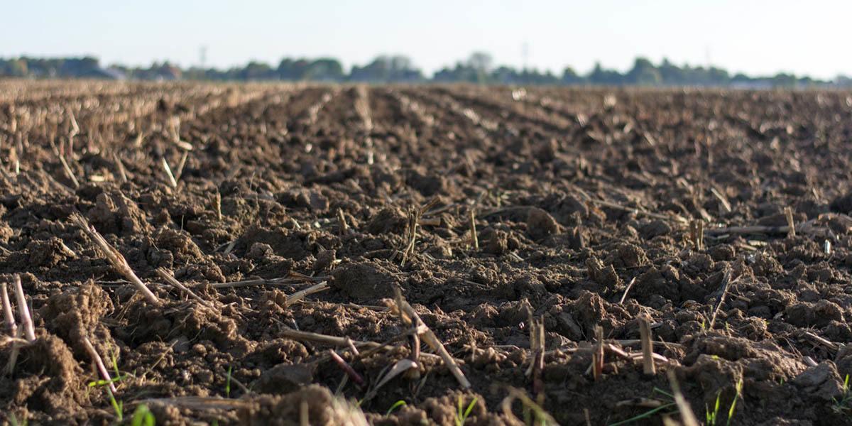soil for grwing
