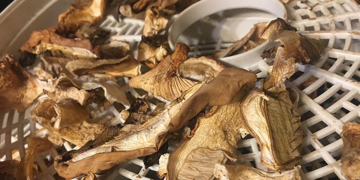 Drying Mushrooms 2
