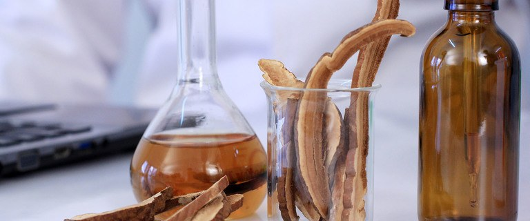 Header: Mushroom Extracts and Supplement Essential Buyers Guide