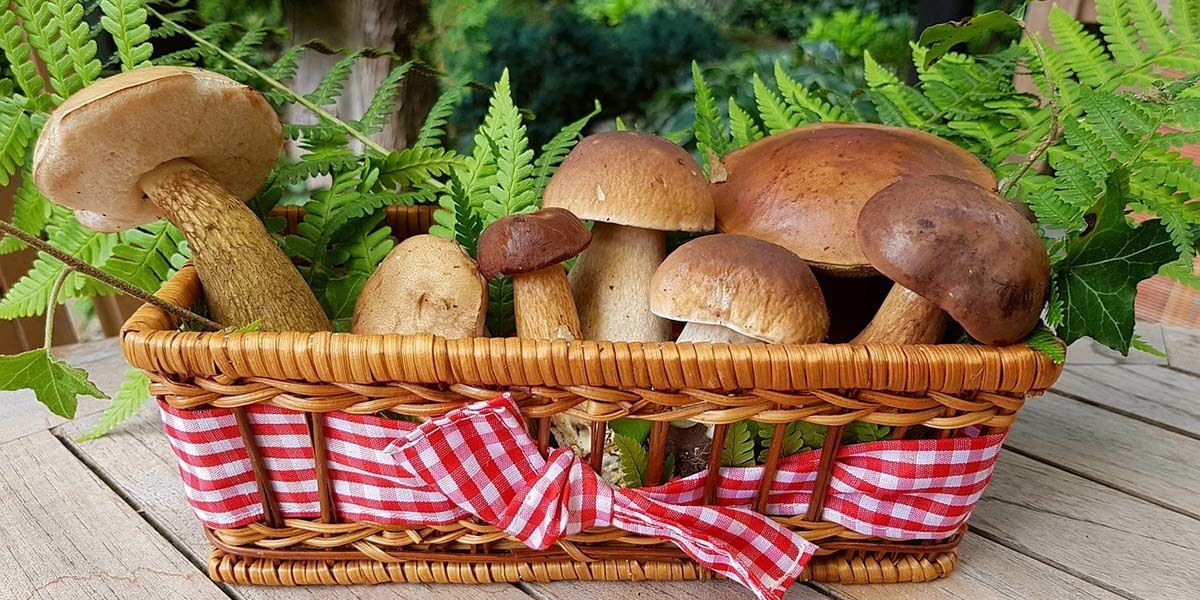 How To Store Mushrooms At Home