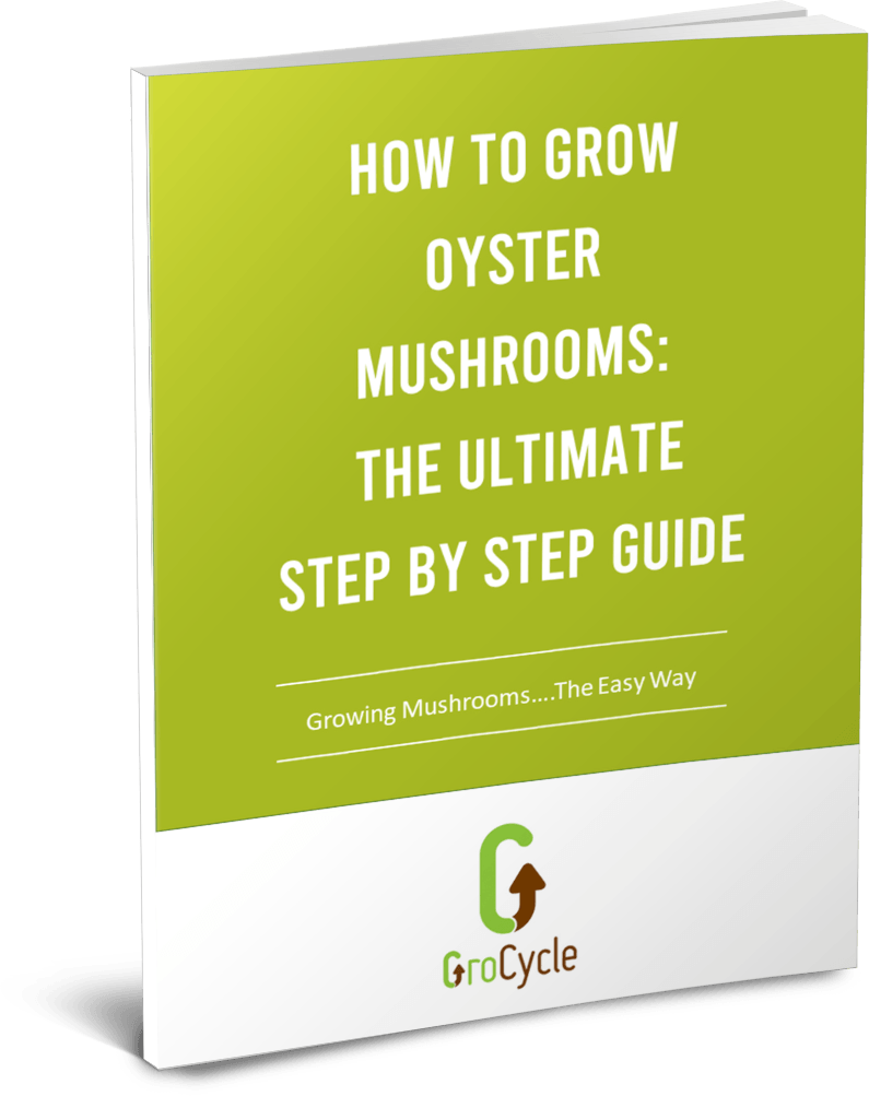 How To Grow Oyster Mushrooms: The Ultimate Step By Step Guide - GroCycle
