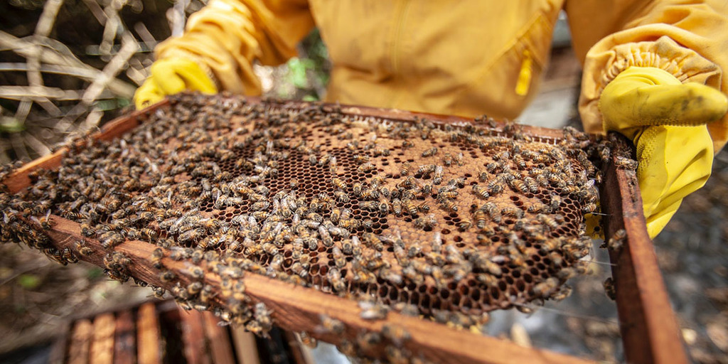 Beekeeping in agroforestry system