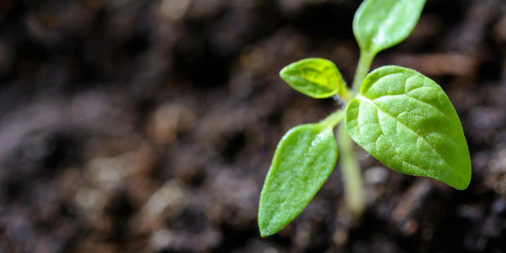 Forest Organic Soil