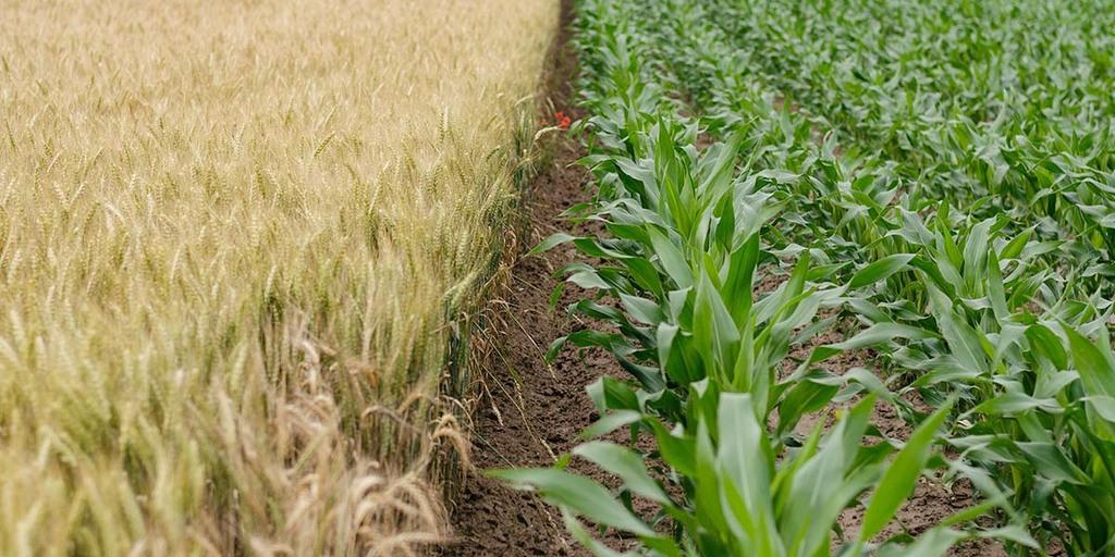agroforestry farming