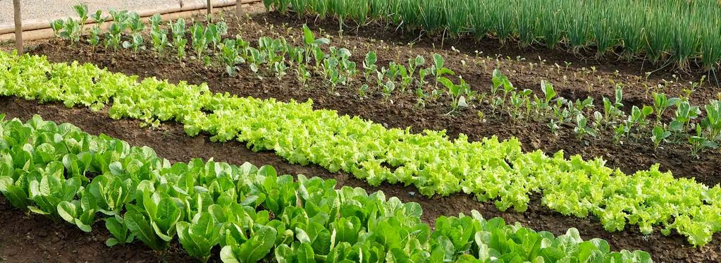 Complete Guide To Online Permaculture Design Courses