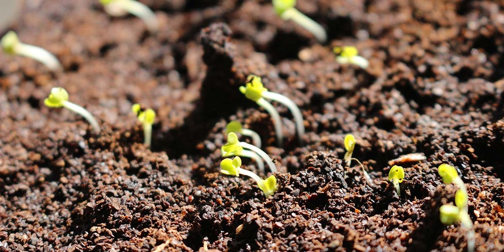 The Ideological Argument Against Growing Microgreens