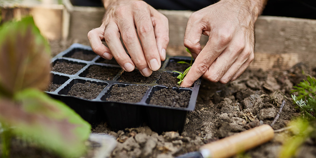 Microgreens crops