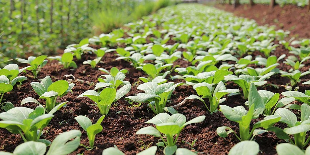 Plan Your Crops and Production