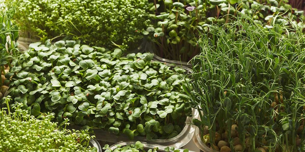 Environmental Argument Against Microgreens