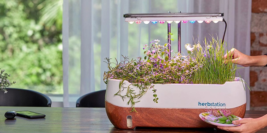 The Ideological Aspects of Growing Microgreens