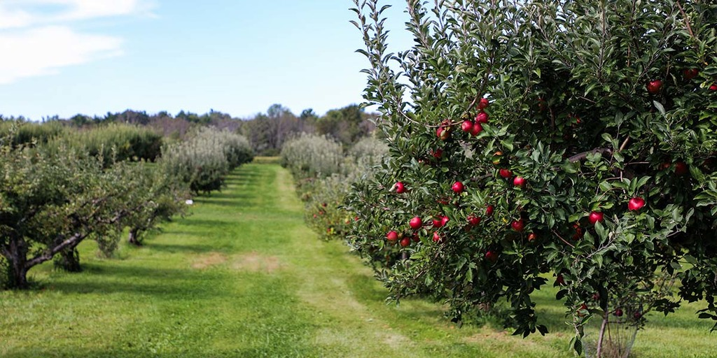 Permaculture orchard trees