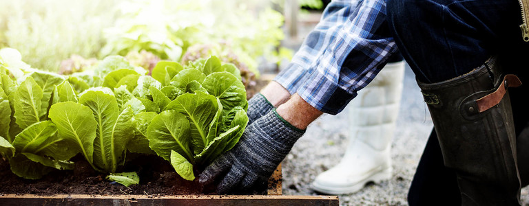 Urban Farming Ultimate Guide and Examples