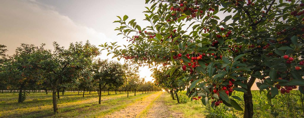 How To Create A Permaculture Orchard