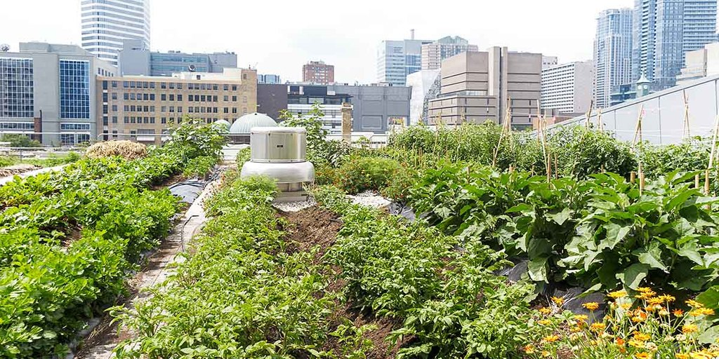 Where Does Urban Farming Take Place?
