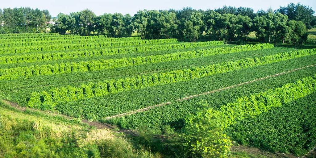 agroforestry farm