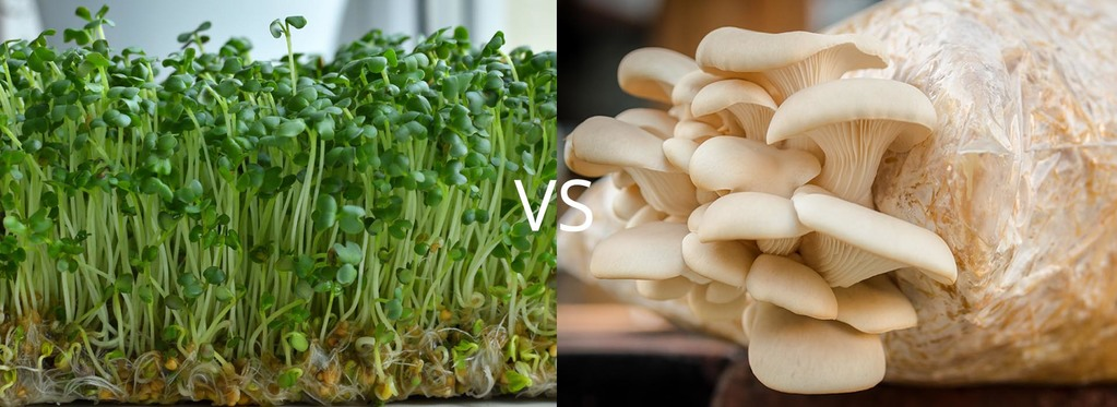 Mushrooms vs Microgreens Similarities, Differences, and How They Can Work Together 1
