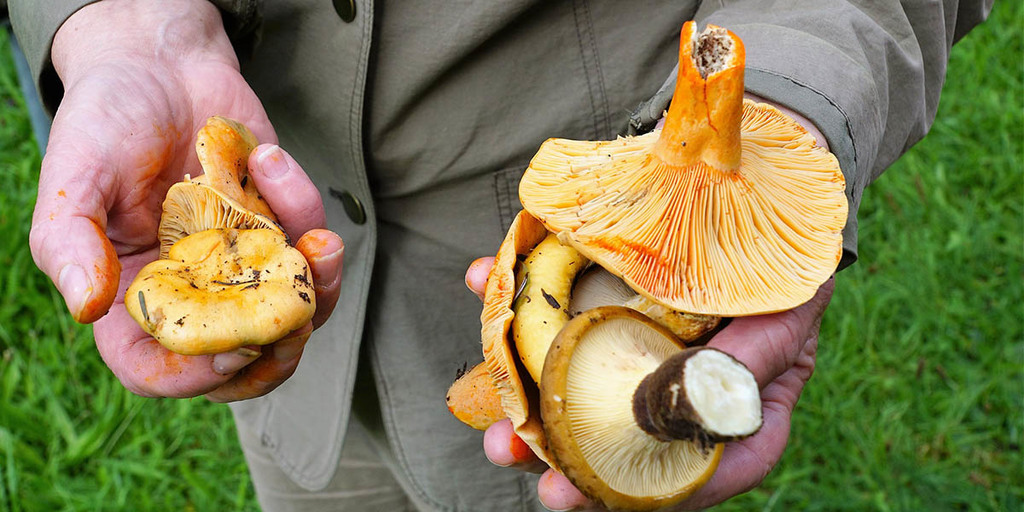 What Are Mushrooms Plants, Animals, or Other