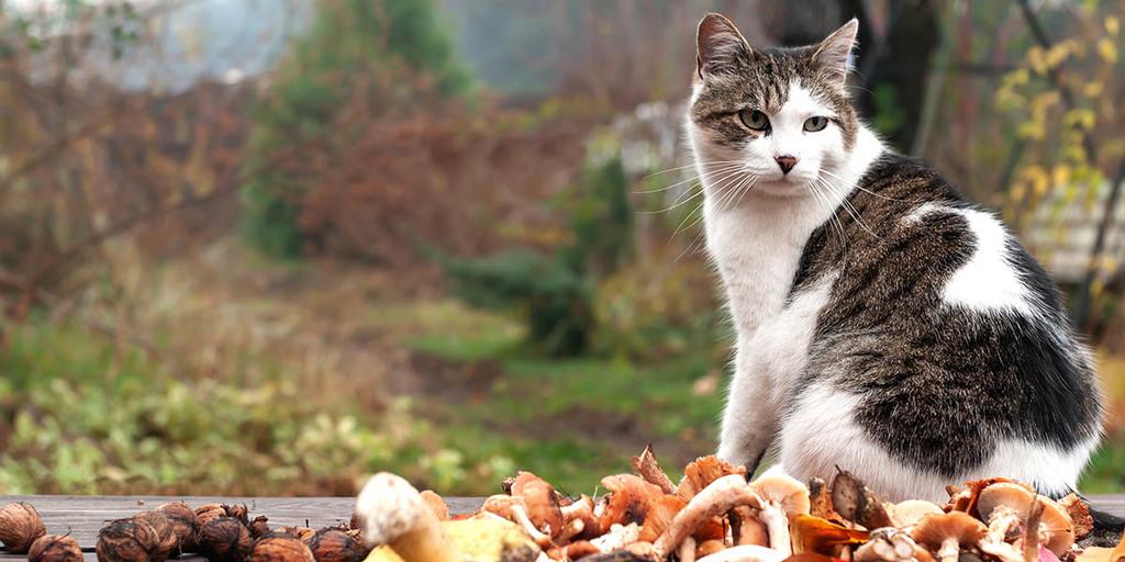 Cats Eat Mushrooms