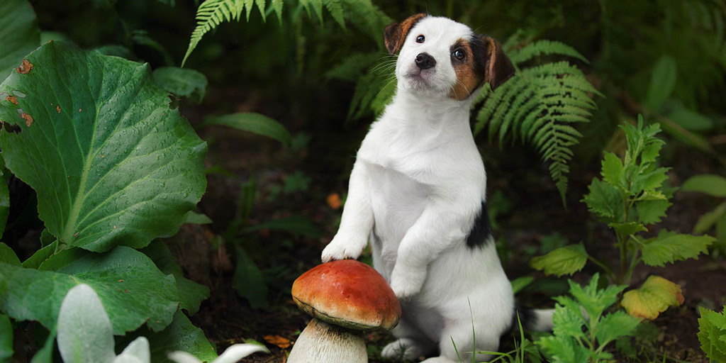 Can Puppies Eat Mushrooms