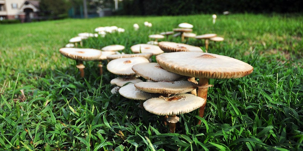What Are Fairy Rings