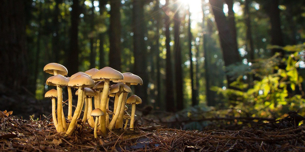 What Is A Fungi?