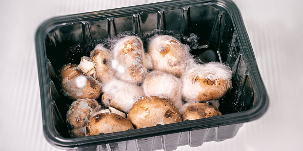 Leaving Your Mushrooms At Room Temperature